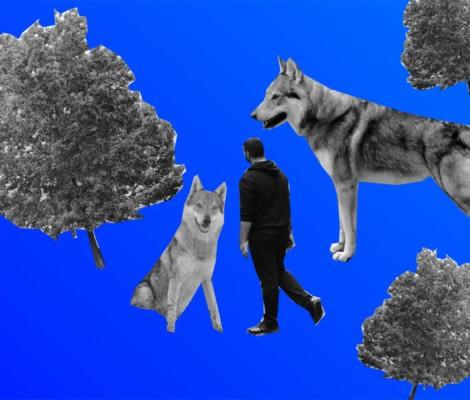 Der Wolf NOVA